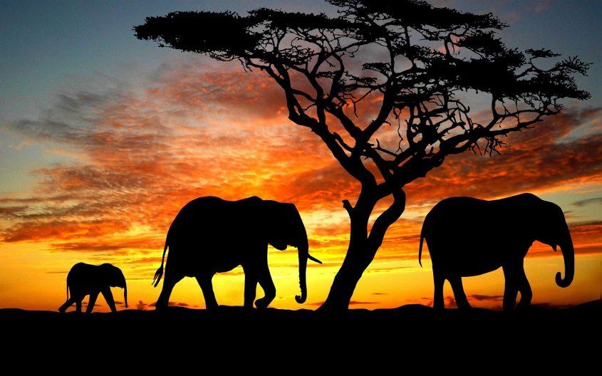 El mejor safari, De Nadine Gordimer