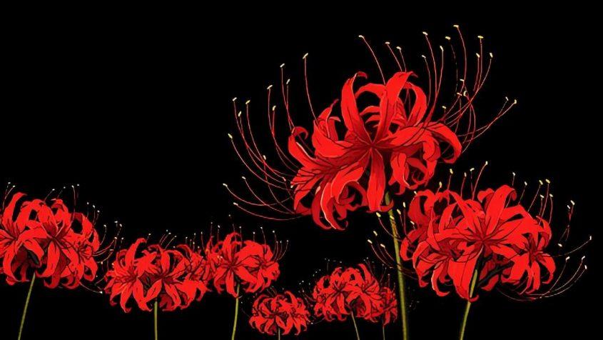 La flor del infierno, De Seishi Yokomizo